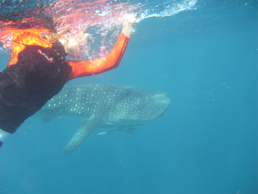 Lydia and a whale shark