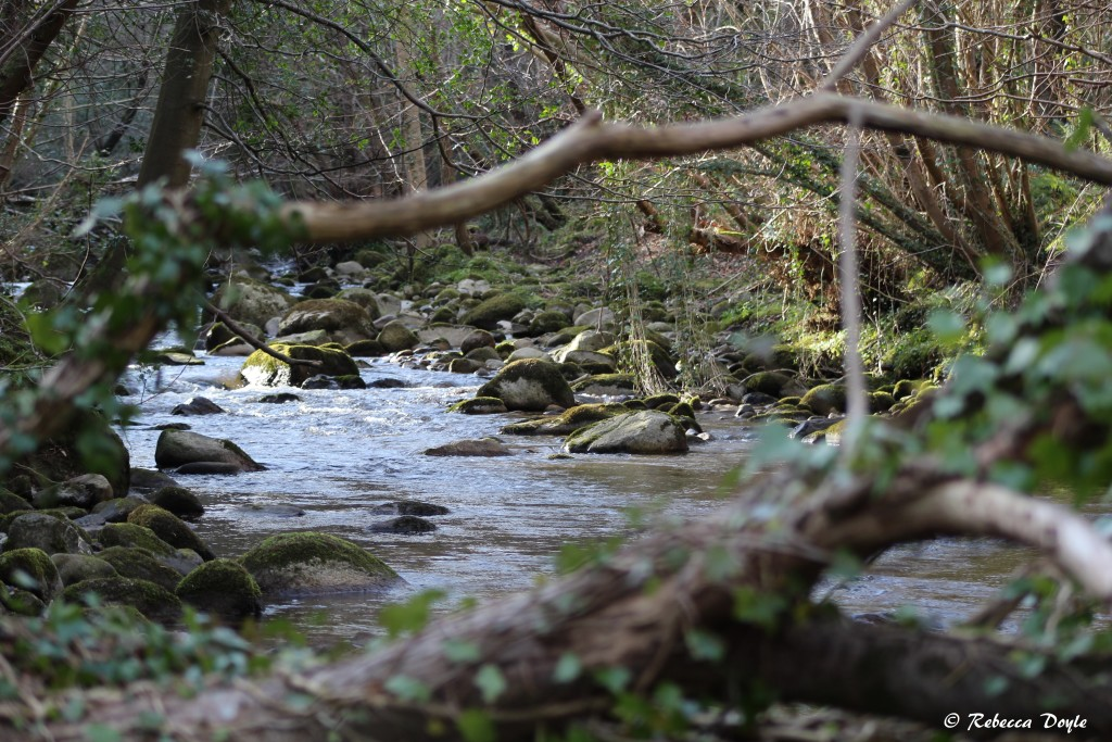 By the river in NPWS Knocksink Woods, Wicklow. Photo- Rebecca Doyle