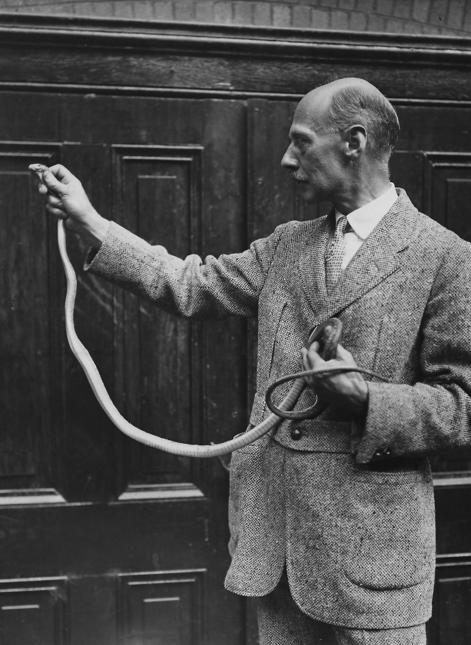 Raymond Ditmars with a green mamba, 1932 (Courtesy of Mike Dee)
