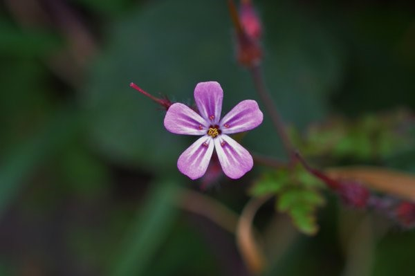 Silver markings on the pink petals are very prominent on this particular individual – Oisín Duffy