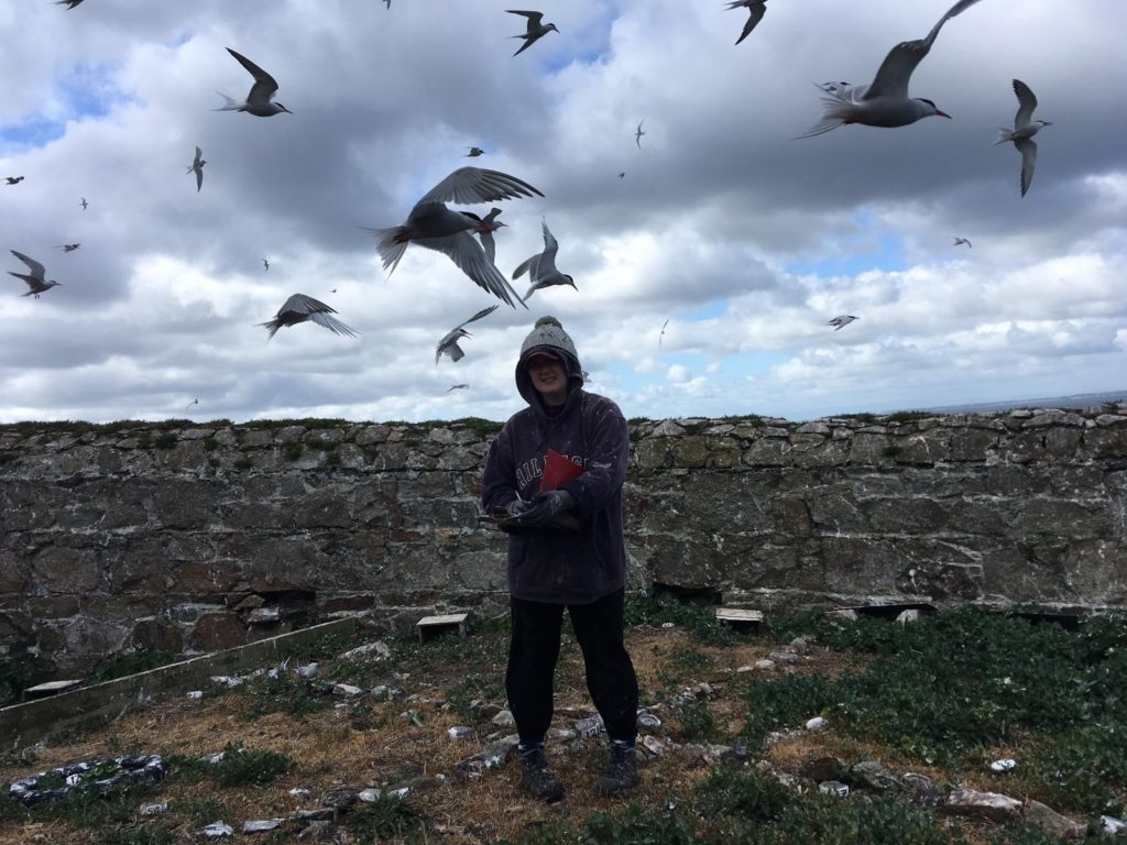 Tern Warden Lorna Gill in her study site checking Common Tern nests, with a few nest boxes visible in the background. (Image Credit: Emma Tiernan, taken under NPWS licence)